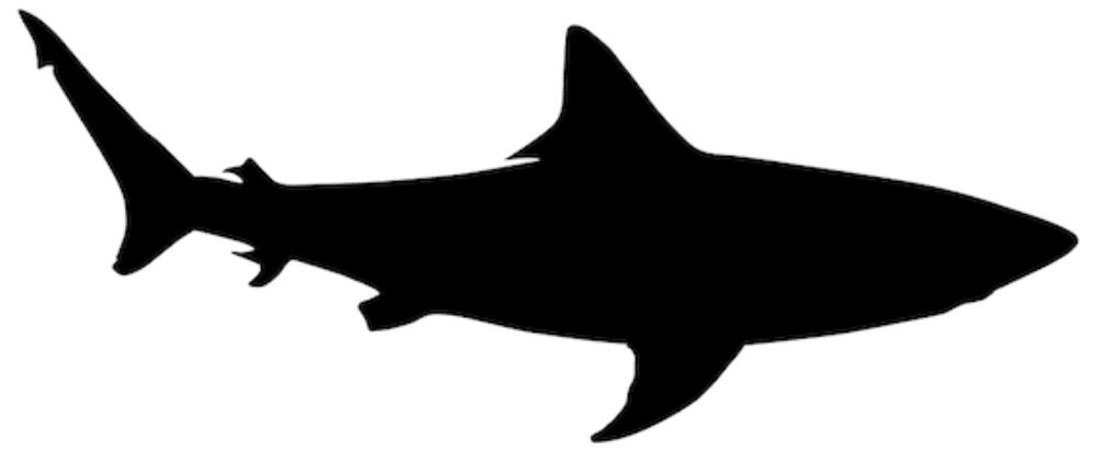Sharks intro
